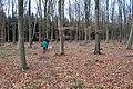 Micheldever wood, Hampshire - geograph.org.uk - 1146210.jpg