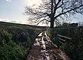 Mid Devon , Farm Track - geograph.org.uk - 1257264.jpg