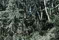 Mid mountain forest PNG.jpg