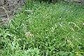 Mini-meadow (NH Bukovec) (22393206051).jpg