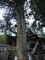 Mitumine-Shrine-Tree.JPG