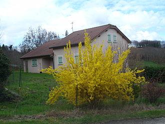 Annoisin-Chatelans - Forsythia in the hamlet of Mollard