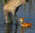 Mommie^^ Where did you go - Flickr - Andrea Westmoreland.jpg