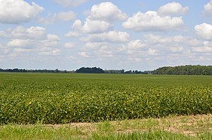 Montgomery Township, Marion County, Ohio - Fields northwest of New Bloomington