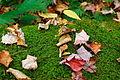 Moss-and-leaves - West Virginia - ForestWander.jpg