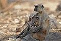 Mothers Love (4634407331).jpg
