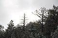 Mount Lemmon - December 2017 02.jpg
