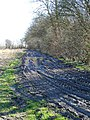 Muddy track by Frid Wood - geograph.org.uk - 365608.jpg