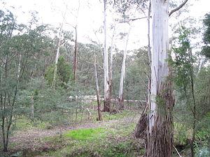 Mullum Mullum Creek - Vegetation around the creek through the valley tract.