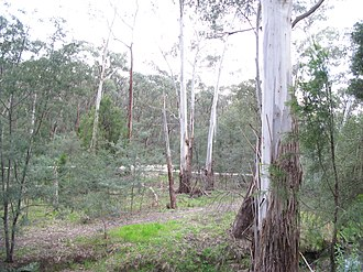 Mullum Mullum Creek - Vegetation around the creek through the valley tract.