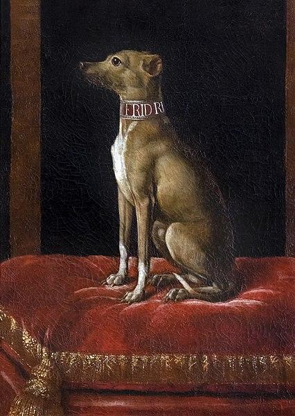 dog - image 10