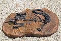 Mussaurus patagonikus DSC 6147.jpg