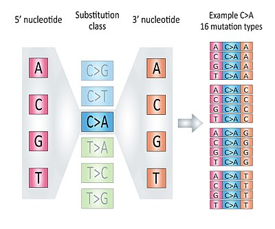 Mutation Concept Map.Mutational Signatures Wikipedia