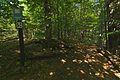 Národná prírodná rezervácia Jarabá skala, Národný park Poloniny (16).jpg