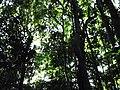 NA VIRGEM SELVA AMAZONICA - panoramio.jpg