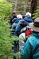 Nature hikers in rainforest 337 01.jpg