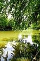 Naturschutzgebiet Hardt Wasserpanorama.jpg