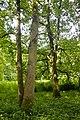Naturschutzgebiet Haseder Busch - Im Haseder Busch (21).jpg