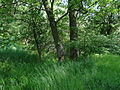 Naturschutzgebiet Heuckenlock 21.05.2014 26.JPG