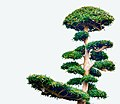 Neatly trimmed and sculptured tree in the yard of a Japanese farmhouse in Japan.jpg