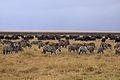 Ngorongoro faune.jpg
