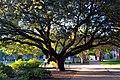 Nice Tree (8219213294).jpg