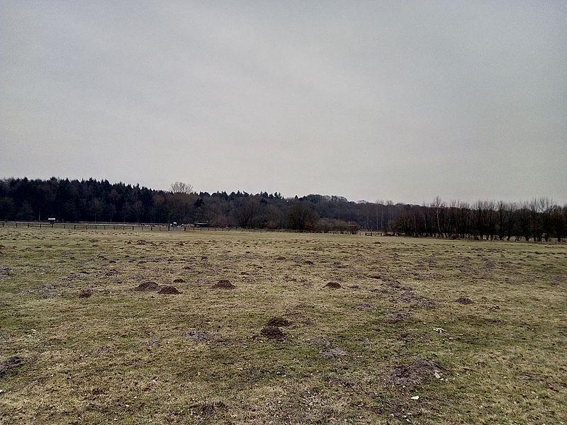 File:Niendorfer-Gehege-Hamburg-Februar.jpg