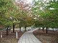 Niigata Hakusan Park Air garden 20131101-02.JPG