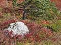 Nisqually Vistat trail mid September 2015. (a031a24fe2c542739a78563fedd3f9de).JPG