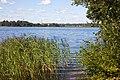 Nizhnee Suzdalskoe Lake - panoramio (1).jpg