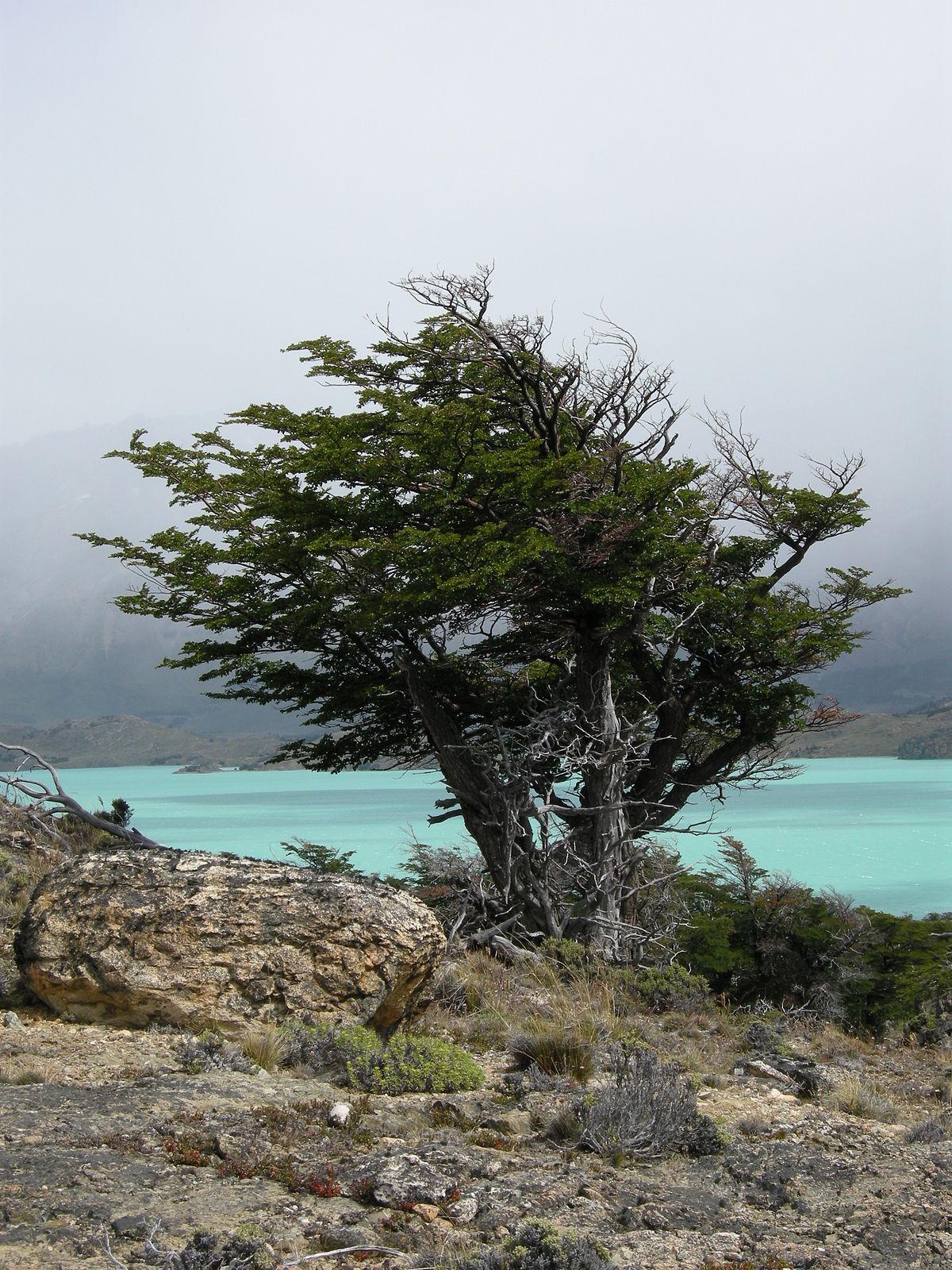 Argentina en la reserva ecoloacutegica - 4 9