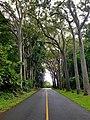 Nutridge, Honolulu, HI.jpg