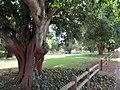 OIC mt hawthorn braithwaite park 2.jpg