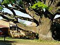 Oak Avenue Potchefstroom-002.jpg
