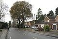 Oaks in Mill Lane, Dorridge B93 - geograph.org.uk - 2197411.jpg