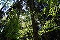 Oberharmersbach Bäume.jpg