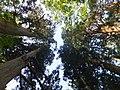 Oguni, Tsuruoka, Yamagata Prefecture 999-7316, Japan - panoramio (14).jpg