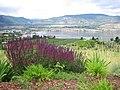 Okanagan Valley wine country views 02.jpg