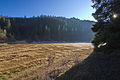 Okerstausee bei Schulenberg im Harz IMG 3733.jpg