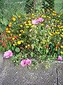 Okrasné květiny doma a na zahrádce 01.jpg