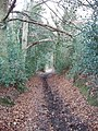 Old Shire Lane beside Newland Park, Chalfont St Giles - geograph.org.uk - 123769.jpg