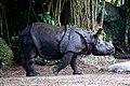 One Horned Rhinocerous 03.jpg