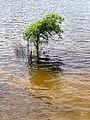 One tree Parkers Creek Jordan Lake NC SP 3749 (36009071061).jpg