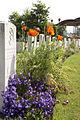 Oostende New Communal Cemetery 2.jpg
