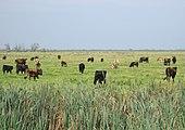 Eu biodiversity strategy wiki
