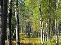 Open forest (6166890914).jpg