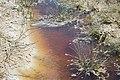 Organsko opterećenje slanog jezera.jpg