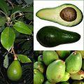 Owoce Awokado.jpg