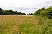 Oxley Meadow 1.jpg