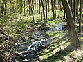 Pölzer Fließ im NSG Gramzow-Seen 25-04-2010 373b.jpg